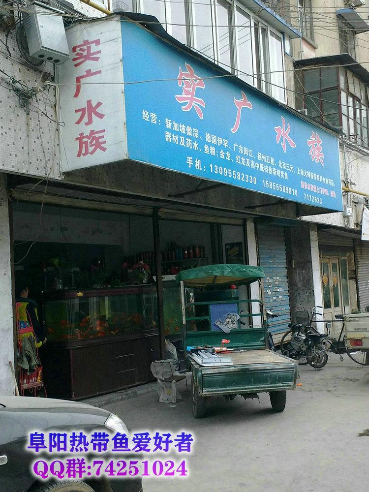 阜阳热带鱼水族店